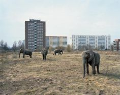 Lichtenberg. These Soviet inspired pre-fabricated Plattenbau (panel-building) housing complexes became prevalent in Berlin after WWII. The elephants were part of an itinerant circus.