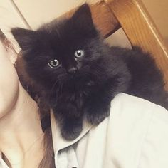 #just #chillin #on #this #shoulder 😺 #cat #kitty #fluffy #blackhair #black #blackkitty #mini #minicat #baby #minitiger #pet #cute #adorable #hipster #hipstercat #cool #ninja Black Kittens, Hipster Cat, Ninja, Black Hair, Kitty, Photo And Video, Pets, Shoulder, Baby