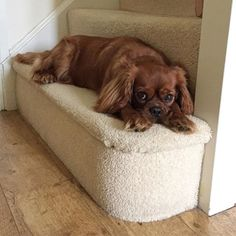 Daisyriggens - This is my favourite spot to sleep & keep watch for burglars when I'm home alone