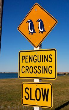 what magical far away place has enough penguins waddling around to warrant penguin crossing signs??
