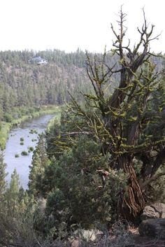 Central Oregon - Deschutes River