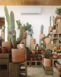How many cacti is too many? @hotcactus_la showing us how it's done - and also how come we can't get terracotta like this in the UK?! #HaarkonInUSA