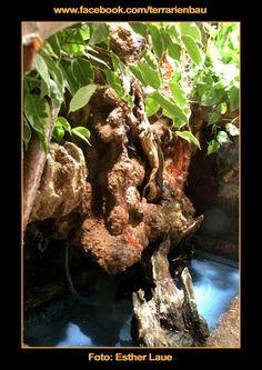 Bild 14 - Bau und Einrichtung Regenwaldterrarium mit Wasserfall - Bepflanzter Wasserlauf