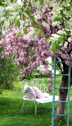 8.3.16 Reading my Bible under a gorgeous Lilac tree and very thankful