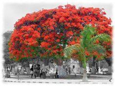 Em Benguela/Angola Acácia Rio, Across The Border, Atlantic Beach, African Nations, Famous Landmarks, African Art, National Parks, Sidewalk, World