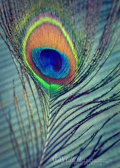 Peacock Feather  5x7 Fine Art Photo Print by DayView on Etsy, $10.00
