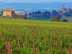 You might want to set aside an entire weekend for Castello Banfi, a family-owned vineyard estate and winery in Brunello di Montalcino. Though it's famous for its award-winning Brunellos, syrahs, merlots, cabernets, and blends, you'll want to stay long after the wine tasting to soak in the spectacular surrounds (the estate boasts 7,000 acres of vineyards, olive groves, and cypress trees).  Vintner's pick: Poggio all'Oro Brunello di Montalcino