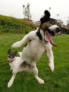 Funny crazy dogs, LOL