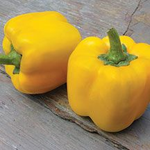 Early Summer Hybrid sweet bell pepper -  Extra-large, 4 to 5 inch fruits mature from dark green to yellow | hpsseed.com