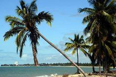 Dica de Destino   São José da Coroa Grande, em Pernambuco, e as belezas naturais que atraem visitantes de todas as partes do mundo.  Foto: Admilson Silva
