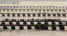 Tourist Attraction India: Kumbh 2013 India | temporary bridge