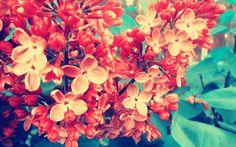 #1439058, flower category - wallpaper images flower