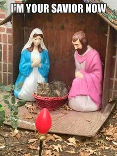 This Grumpy Cat Crashed A Nativity Scene That Will Make You Laugh Out Loud Cute Funny Animals, Funny Animal Pictures, Funny Cute, Cute Cats, Scary Funny, Hilarious, I Love Cats, Crazy Cats, Funny Cat Memes