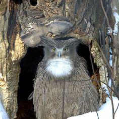 Blakiston's fish owl, by Sergey Yeliseev, via Flickr