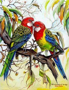 Eastern Rosella Greeting Card (Set of – Tiere Exotic Birds, Colorful Birds, Pretty Birds, Beautiful Birds, Vintage Bird Illustration, Australian Animals, Bird Drawings, Bird Pictures, Illustrations
