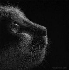 White pencil on black paper.