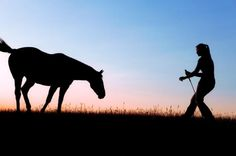 Train MY horse