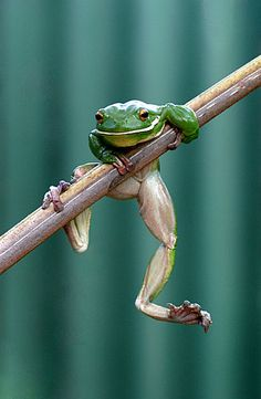 Look at those feet and legs! frog by James Adam