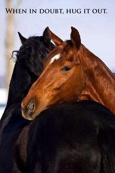 #horses #quote