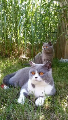 My cats Lissy and Darina 🐱 😺