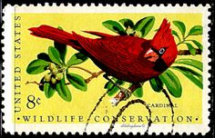 USA.  Wildlife Conservation Issue.  Red Cardinal.  Scott 1428 A842.  Issued  1971 June 12, Lithographed, Engraved (Giori), Perf. 11, 8c. /ldb.