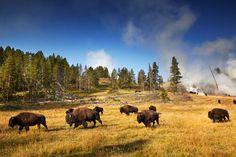 Six Essential Sights of Yellowstone National Park by Matt Munro