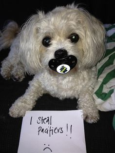 I steal pacifiers from babies!!!