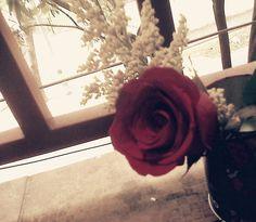 Tumblr Tumblr, Rose, Flowers, Plants, Photography, Pink, Photograph, Fotografie, Photoshoot