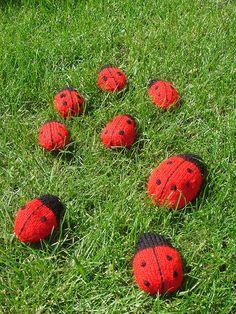 Ladybird army