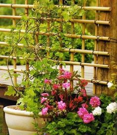 Need a trellis? Make one using the beautiful bamboo! By knowing how to tie them all together properly, you can have a beautiful trellis for your garden. Diy Bamboo, Bamboo Trellis, Diy Trellis, Bamboo Garden, Garden Trellis, Bamboo Ideas, Trellis Ideas, Bamboo Fence, Small Backyard Gardens