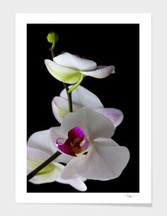 Discover «Orchids», Limited Edition Fine Art Print by Andrei Dragomirescu - From $29 - Curioos