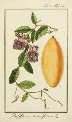 v.3 (tab 201-300, plates 201-300) - Dreyhundert auserlesene amerikanische Gewächse nach linneischer Ordnung. - Biodiversity Heritage Library | 1788