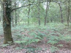 a reza.arnoia.ourense