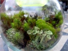 Lichen and moss supplies for terrariums