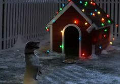 Sweet Pup Patiently Waits For Santa
