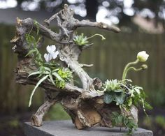arrangement on root structure by Janet
