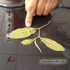 How to judge quality of tea based on pictures. Difference between tea grades and how the tea is ranked. What to look at when buying tea on internet from online tea shop. Arbor Tree, Wholesale Tea, Tea Blog, Autumn Tea, Pu Erh Tea, Types Of Tea, Flower Tea, Chinese Tea, Best Tea