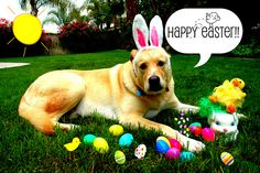 Easter Dog by boysmamax3, via Flickr