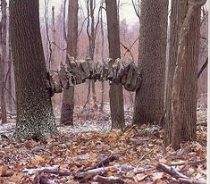 Between Two Trees, Dunbar PA (photo: Andy Goldsworthy)