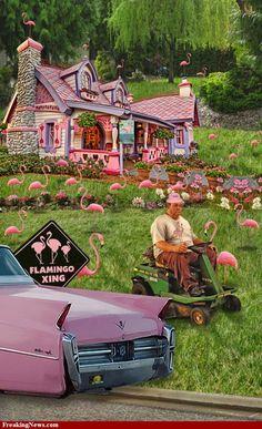 flamingo heaven