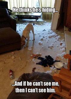 Comical animals pictures – 4 pics