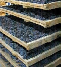 here grapes are dried for the  appassimento method used to make   Amarone wine