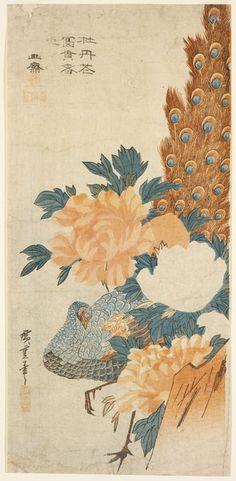 Utagawa Hiroshige Japanese, 1797-1858 Wakasaya Yoichi, publisher Japanese Peacock and peonies (Botan ni kujaku), 1830's Polychrome wood block print /RISD Museum