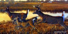 Wildlife Artist Bruce Miller On the Run Unframed Whitetail Deer Print | WildlifePrints.com