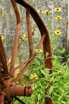 A vintage iron rake wheel in the summer with Black-Eyed-Susans