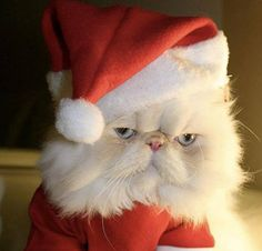 PetsLady's Pick: Funny Grouchy Cat Of The Day  ... see more at PetsLady.com ... The FUN site for Animal Lovers