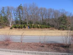 Fort Devens bushes