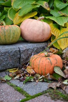 LOVE the wind-blown leaves gathered around the first pumpkiny gourd! :)
