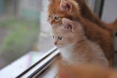 #kittens #cats