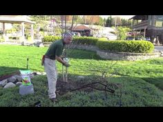 www.Sollecito.com In this video you'll learn how to fertilize plants. Landscaping ideas & tips from Sollecito Landscaping Nursery, a Syracuse, NY landscaping nursery. To get advice from a Senior NYS Certified Landscaping Professional on how you can design & create sustainable and affordable landscapes visit http://sollecito.com. #syracuse #syracuse_NY #LandscapingDesign #BackyardLandscapeDesign